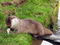 Tamar Otter & Wildlife Centre, Visitor Attractions, Bude