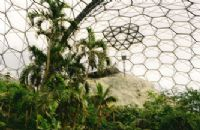 Rainforest Biodome - early developments