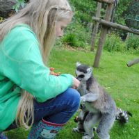Meeting the Lemurs, Newquay Zoo