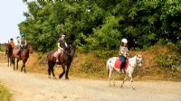 Cornish Riding Holidays/Wheal Buller Riding School, Horse Riding Centres