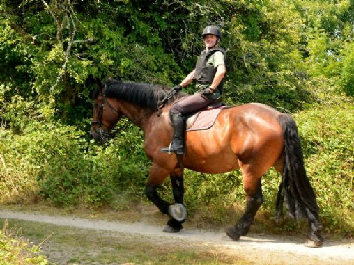 Cornish Riding Holidays/Wheal Buller Riding School