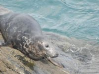 Cornwall Seal Group Research Trust, Wildlife Groups