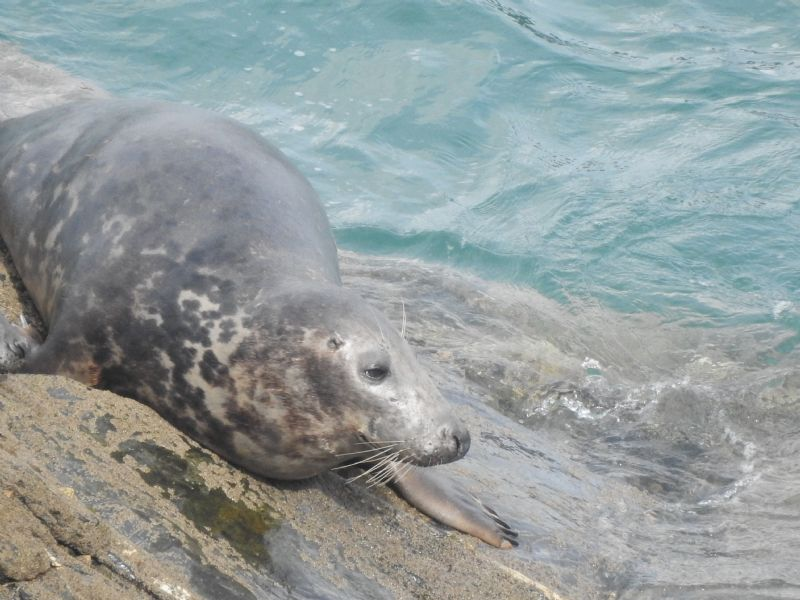 Image copyright Cornwall Seal Group Research Trust