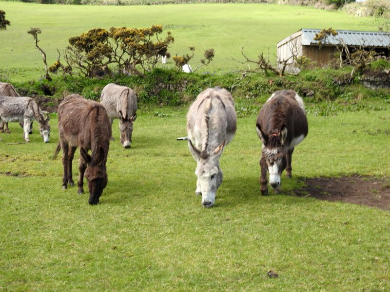 The Flicka Foundation Donkey Sanctuary