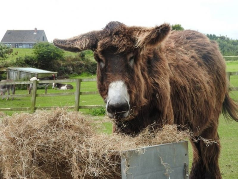 Bertie at The Flicka Foundation Donkey Sanctuary