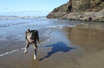 Dog friendly accommodation and holidays in Cornwall
