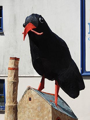 Chough at Mazey Day