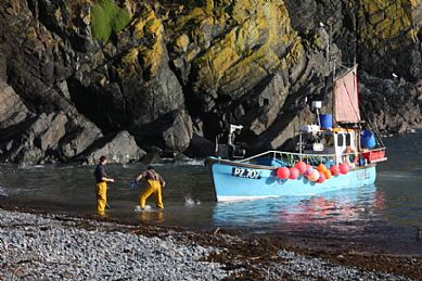 Bringing in the catch at Cadgwith