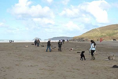 Dogs and their owners enjoying Perranporth Beach