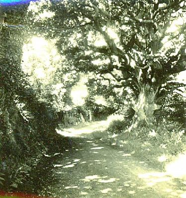 Sunken lane at Malpas