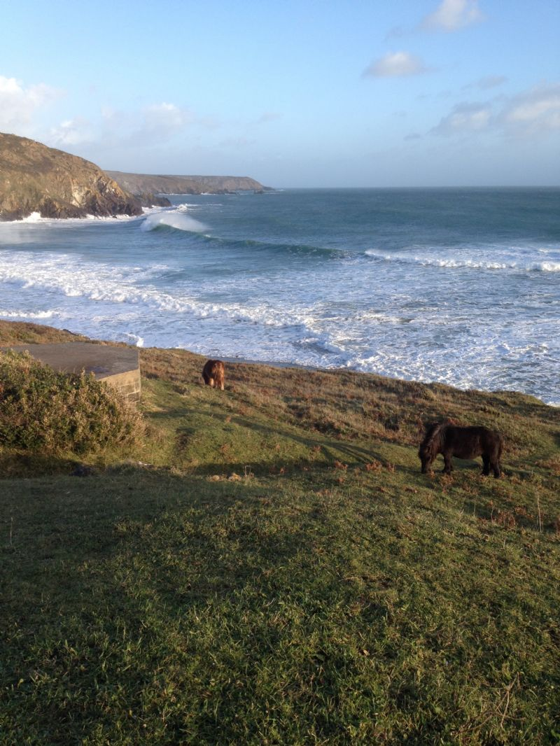 Exmoor Ponies at Kennack Sands