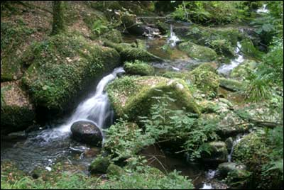 Kennall Vale Nature Reserve Walks In Cornwall Cornwall