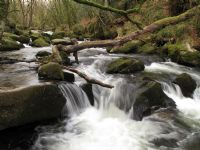 Golitha Falls on the upper reaches of the River Fowey