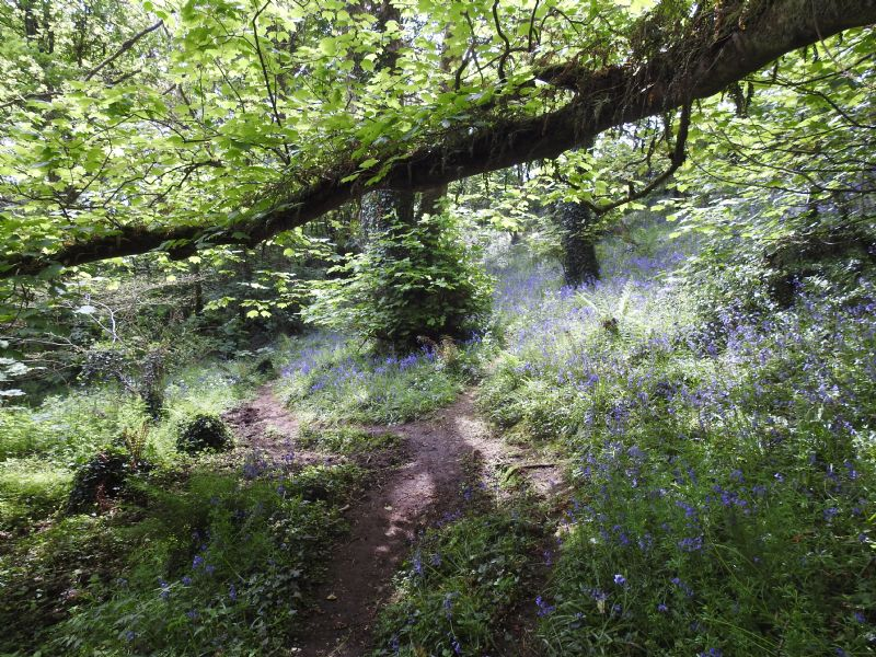 Tremenheere Woods
